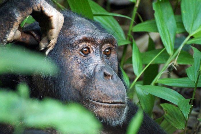 Die Unbandige Kraft Der Natur Uganda Gruppenreise 16 T Reisen Mit Sinnen
